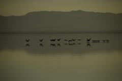 Salton Sea 007