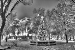Christmas Tree Monochrome