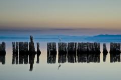 Egret at the Salton Sea