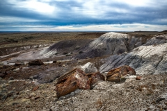 Petrified-Forest-Giant-Logs
