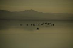 Salton Sea 006